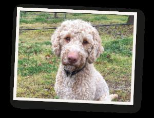 Millgrove Truffles, Solly the truffle dog