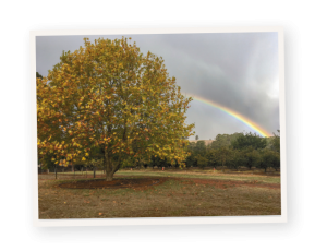 A rainbow over the Millgrove Manjimup truffiere